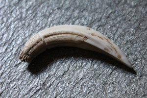 Amulett Claw from animal